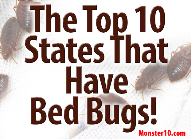 bedbugs how do i know i have bed bugs