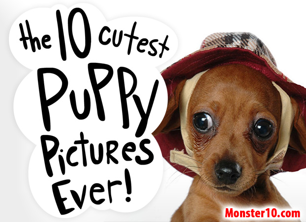 The 10 Cutest Puppy Pictures Ever!